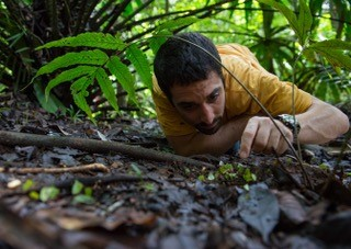 Photo of Jonathan Z. Shik laying on the ground in the rainforest of Panama, studying ants. Photo: Jonathan Z. Shik