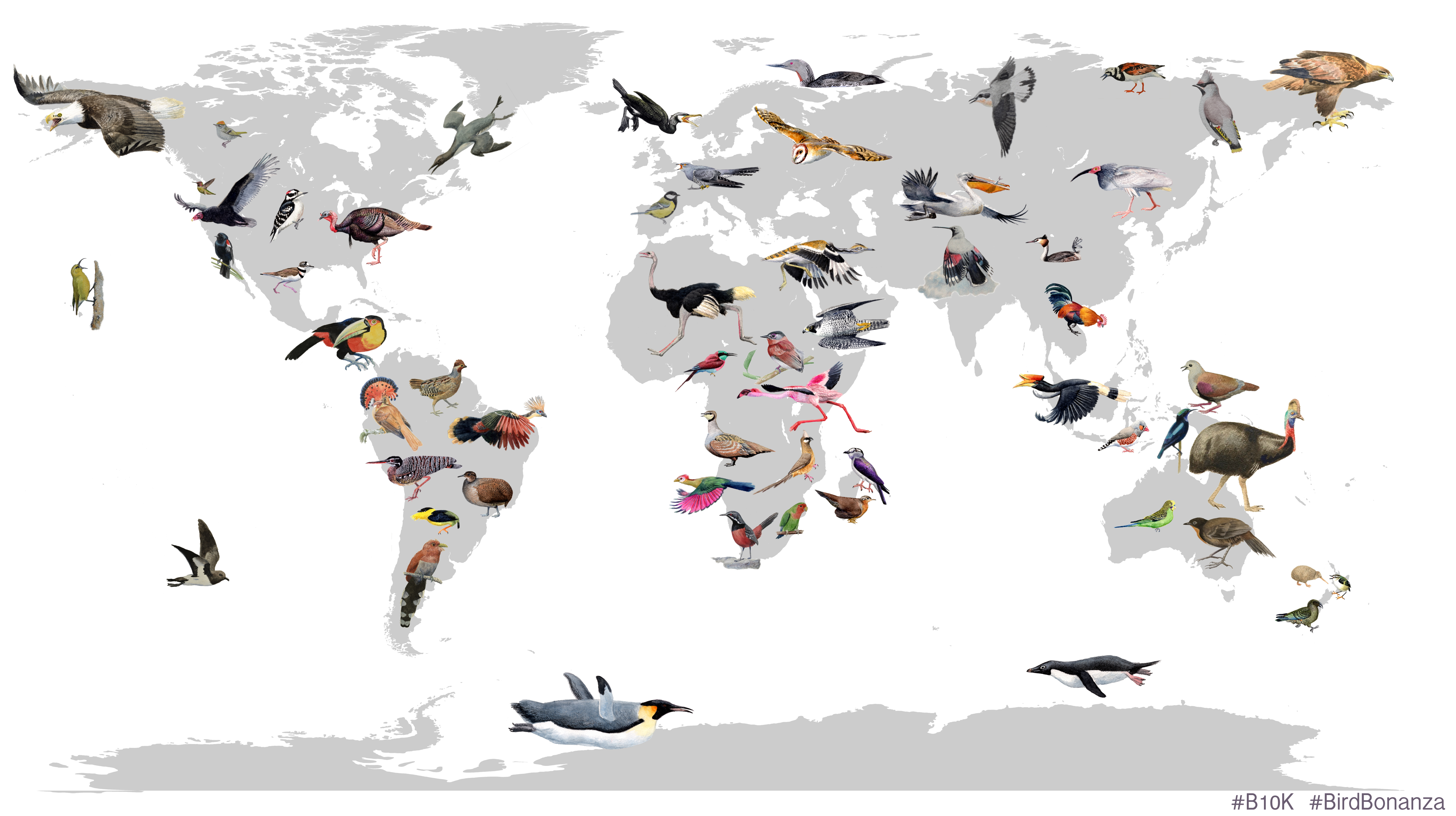 Collage of birds emerging in different parts of the world, by Josefin Stiller