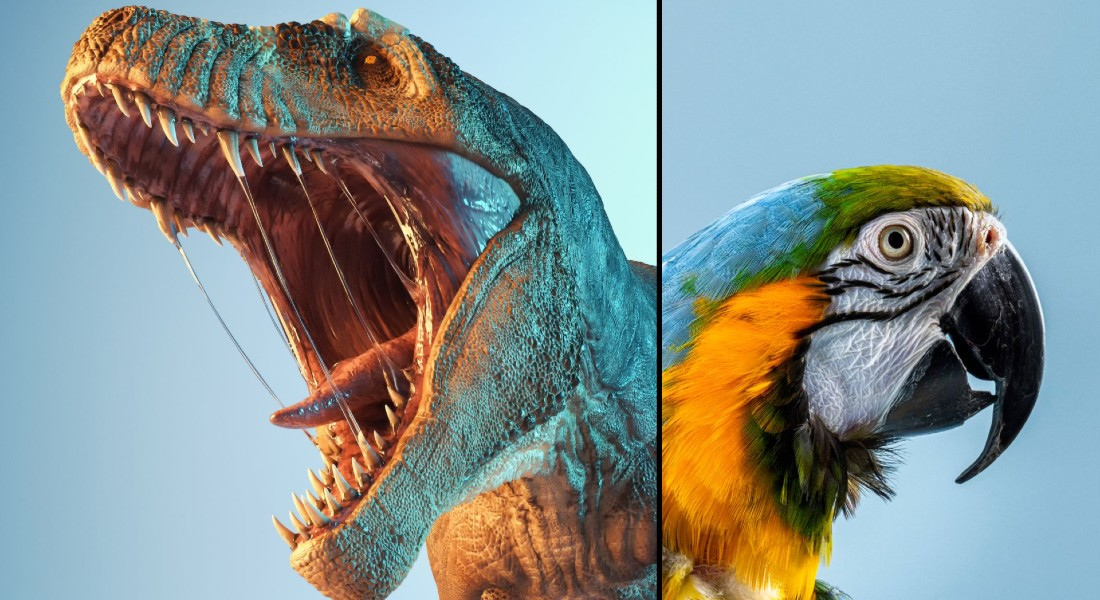 Photo of a dinosaur and a parrot