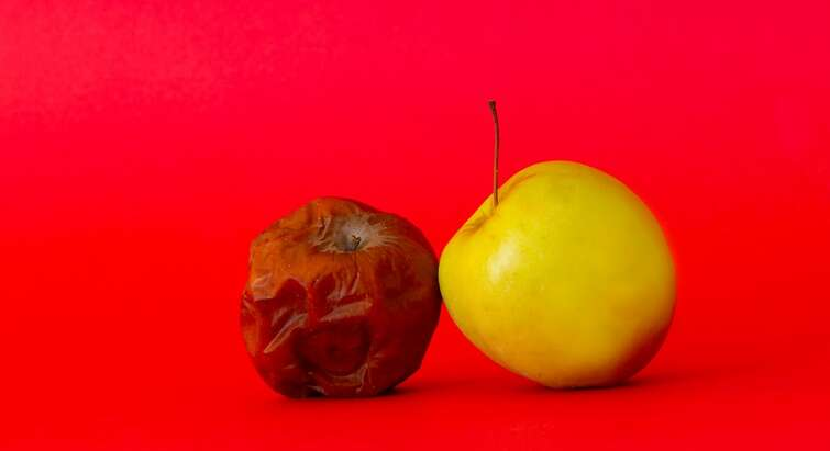 Photo of a fresh and a moldy apple