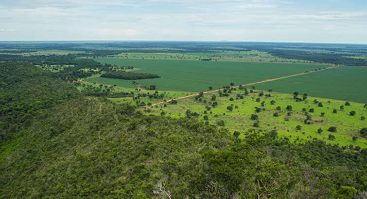 Rainforest is cleared to expand agricultural land