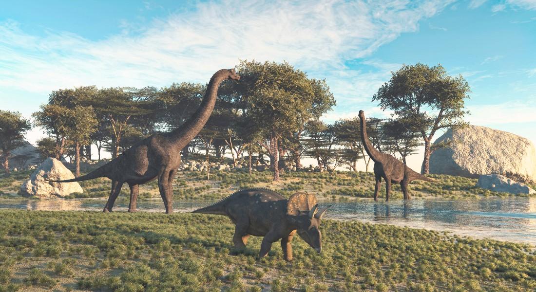 Photo of dinosaurs