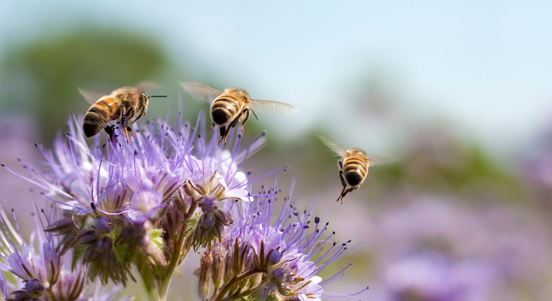 Bies are less likely to die from pesticides, because of this new invention. Photo: Getty Images