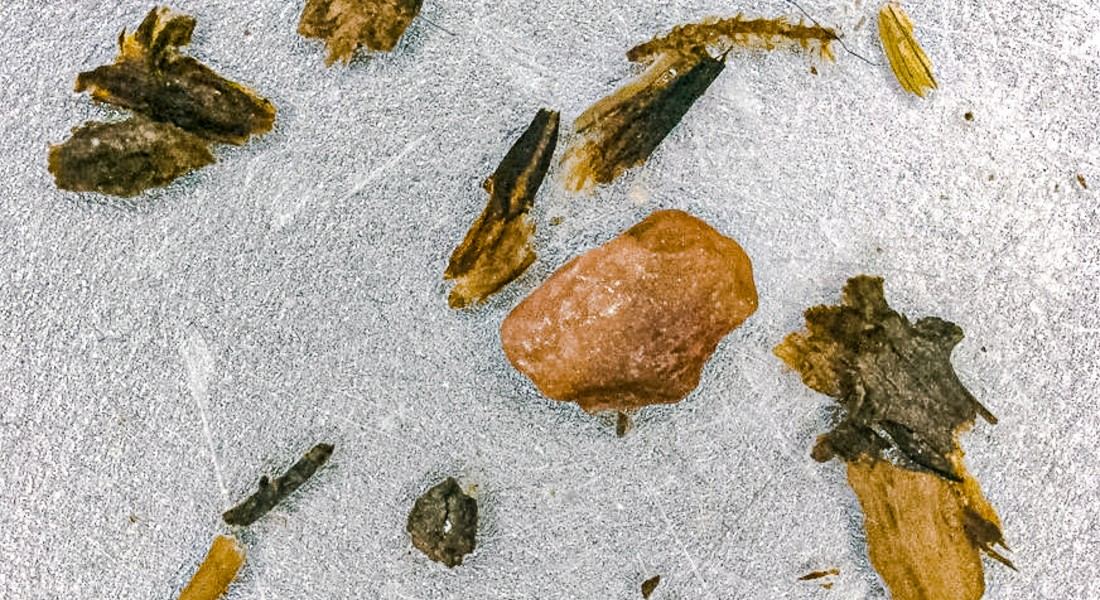 Photo of the branches and moss found in the ice. University of Vermont