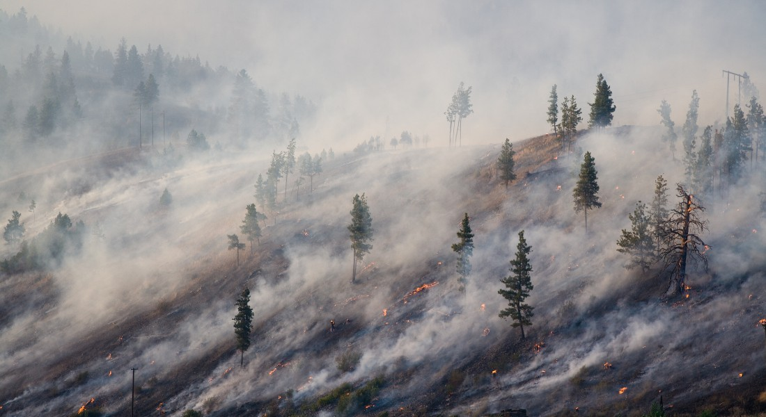 Photo of trees burning because of climate change