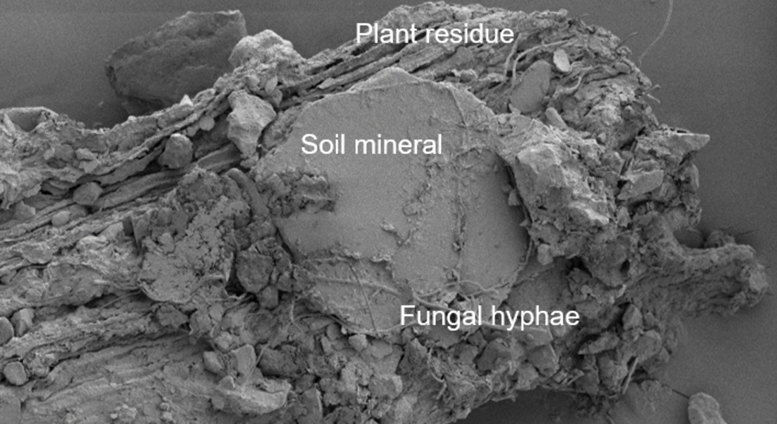 Close-up of how plant residues are being protected in the soil mineral and glued together by fungal hyphae. A process that prevents carbon from being emitted as CO2. Photo: Carsten W. Müller.