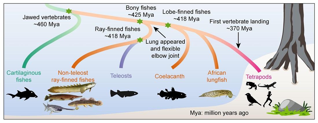 Timeline of evolution
