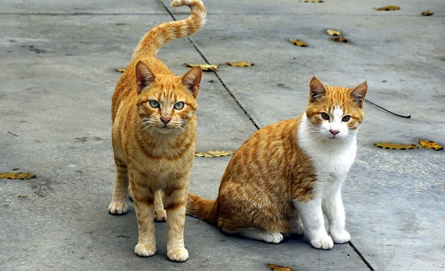 Two cats on the pavement.