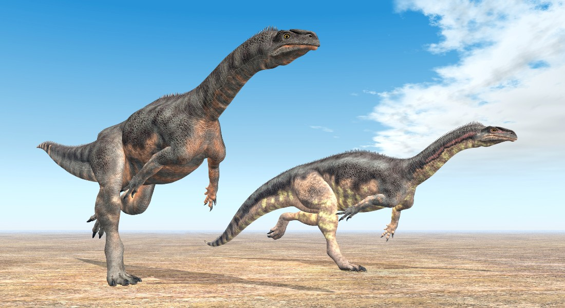 Two Plateosaurus on their way